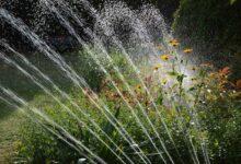 Photo of Mehr Freizeit trotz eines gepflegten Gartens