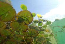 Photo of Ein Teich im eigenen Garten anlegen – Fischteich oder Molchteich?