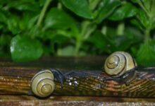 Bild von Schnecken im Hochbeet – Was tun zum Schneckenschutz?