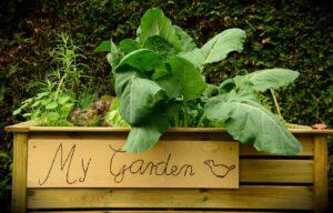 Ratgeber: Hochbeet bepflanzen