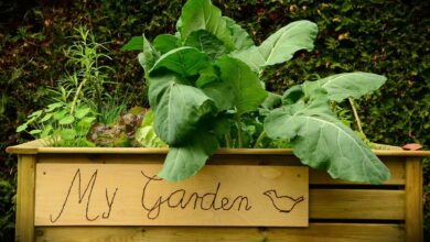 Bild von Hochbeet im Garten – So geht das Ernten, Auffüllen und die Aussaat