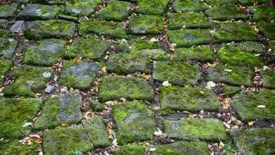 Bild von Algen von Stein entfernen – So werden Pflastersteine wieder ansehnlich