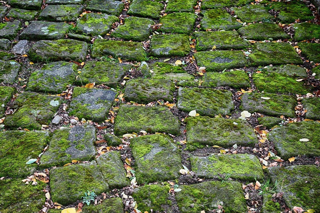 Ratgeber: Steine von Moos und Algen befreien