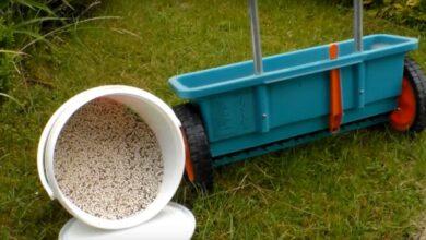 Gartenarbeit Frühjahr: Wie Rasen düngen? So wird's richtig gemacht!