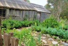 Gemüsebeet anlegen - Anleitung für den besten Ertrag