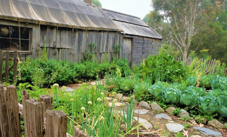 Bild von Gemüsebeet anlegen – DIY Schritt für Schritt Anleitung