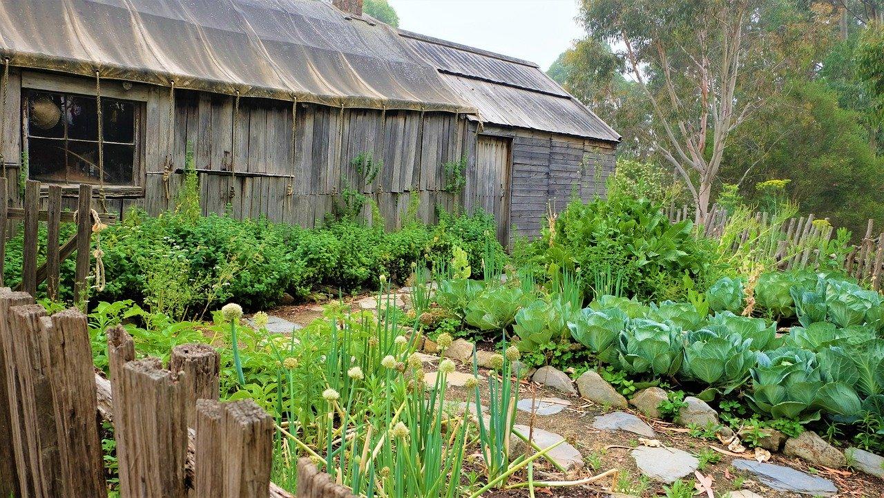 Mediathek von Mein Garten