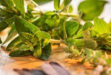 Bild von Hochbeet bepflanzen mit Kräutern