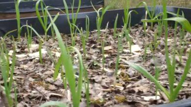 Bild von Hochbeete Bepflanzung & Füllung – Hochbeet im März 2020