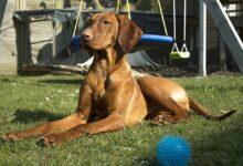 Ruhestörung durch Hundegebell - Wo endet die Zumutbarkeit?