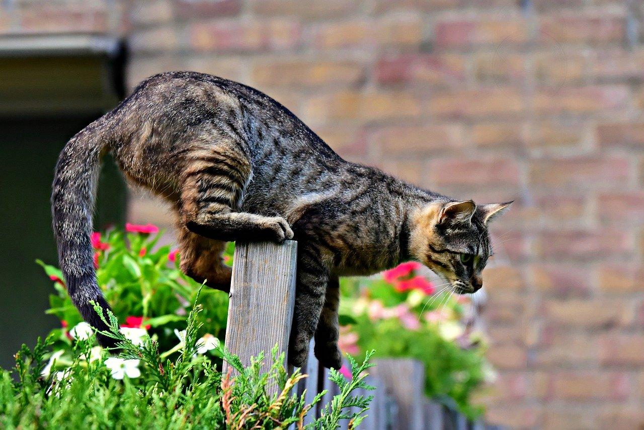 Ratgeber: So machen Sie Ihren Garten für Katzen unattraktiv.