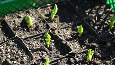 Gartenarbeit: Aussaaten und Pflanzen im März