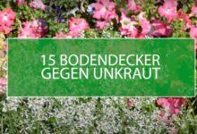 Bild von 15 Bodendecker gegen Unkraut – für einen pflegeleichten Garten
