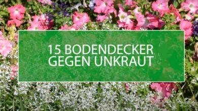 15 Bodendecker gegen Unkraut – für einen pflegeleichten Garten