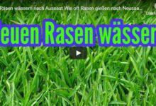 Bild von Rasen wässern nach Aussaat – Wie oft sollte man Rasen gießen nach Neusaat?