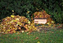 Bild von Der Herbst kommt: Wohin mit dem Laub?