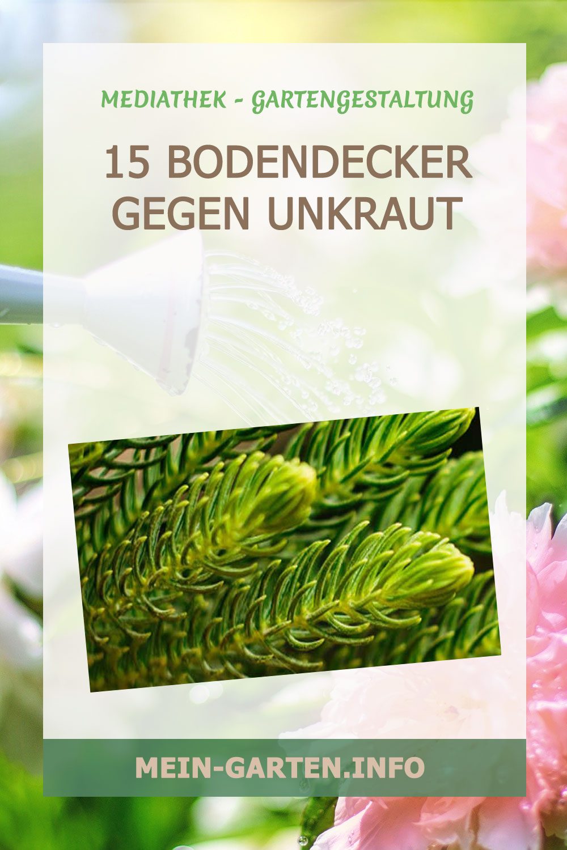 15 Bodendecker gegen Unkraut
