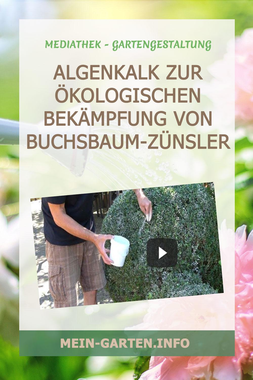 Algenkalk zur ökologischen Bekämpfung von Buchsbaum-Zünsler
