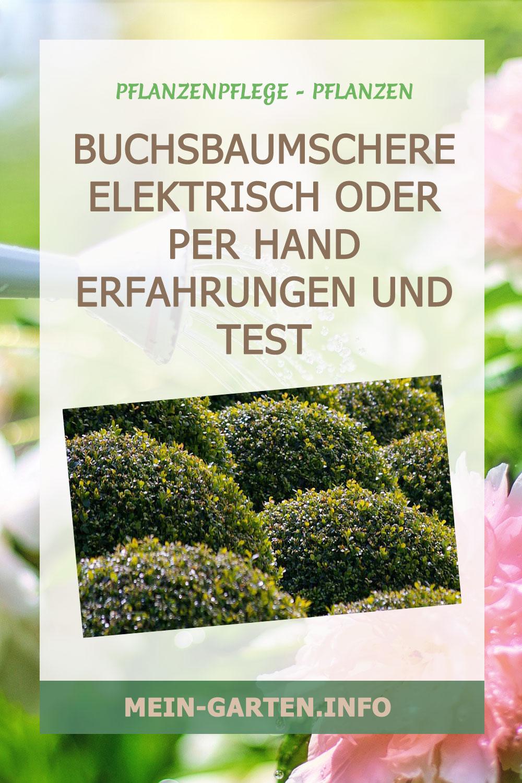 Buchsbaumschere elektrisch oder per Hand Erfahrungen und Test