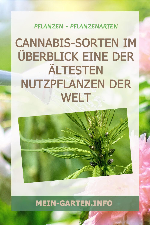 Cannabis-Sorten im Überblick Eine der ältesten Nutzpflanzen der Welt