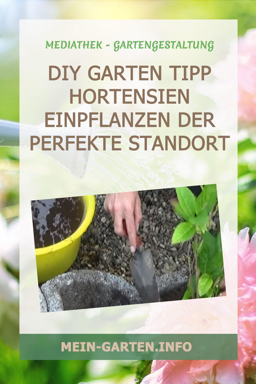 DIY Garten Tipp Hortensien einpflanzen Der perfekte Standort