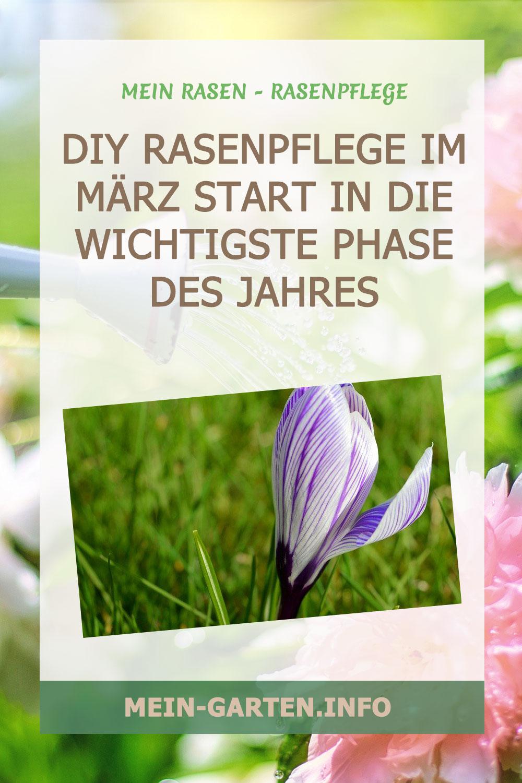 DIY Rasenpflege im März Start in die wichtigste Phase des Jahres