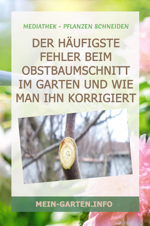 Der HÄUFIGSTE FEHLER beim Obstbaumschnitt im Garten und wie man ihn korrigiert