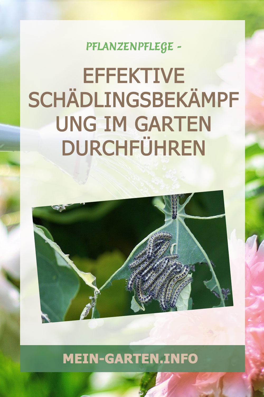 Effektive Schädlingsbekämpfung im Garten durchführen