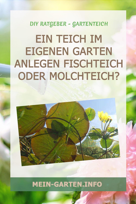 Ein Teich im eigenen Garten anlegen Fischteich oder Molchteich?