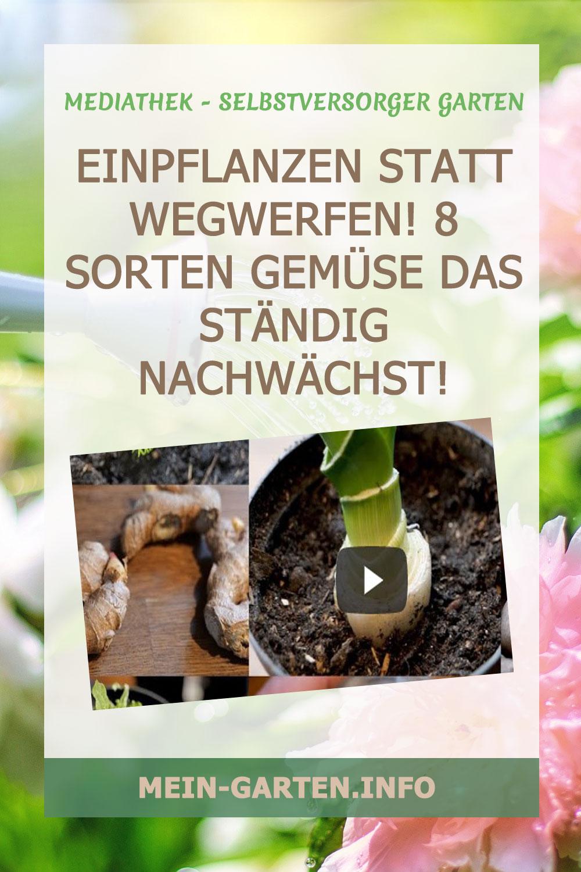 Einpflanzen statt wegwerfen! 8 Sorten Gemüse das ständig nachwächst!