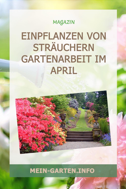 Einpflanzen von Sträuchern Gartenarbeit im April