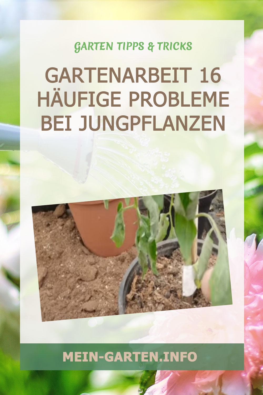Gartenarbeit 16 häufige Probleme bei Jungpflanzen