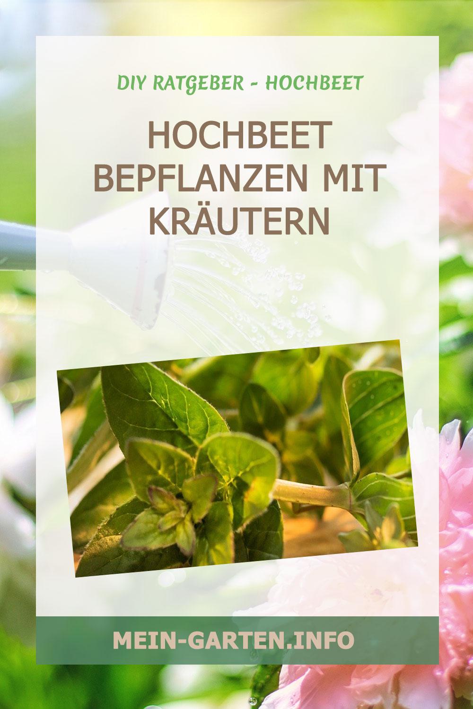Hochbeet bepflanzen mit Kräutern