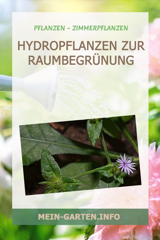 Hydropflanzen zur Raumbegrünung