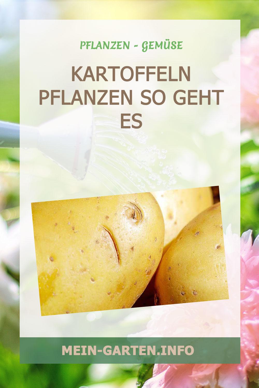 Kartoffeln pflanzen so geht es