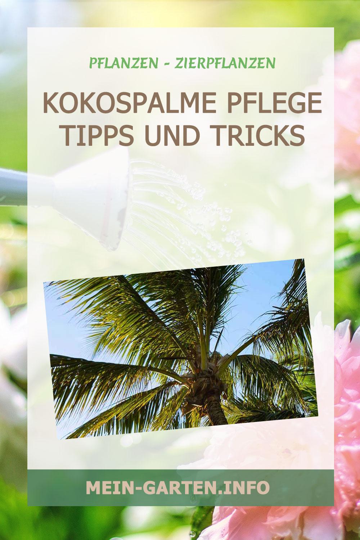 Kokospalme Pflege Tipps und Tricks