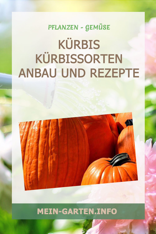 Kürbis Kürbissorten Anbau und Rezepte