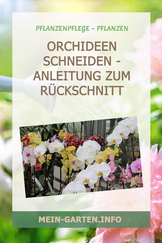 Orchideen schneiden – Anleitung zum Rückschnitt