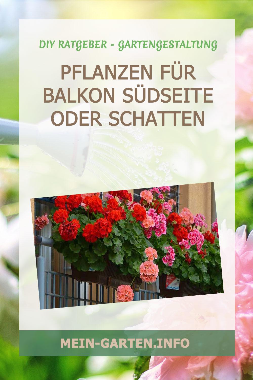 Pflanzen für Balkon Südseite oder Schatten