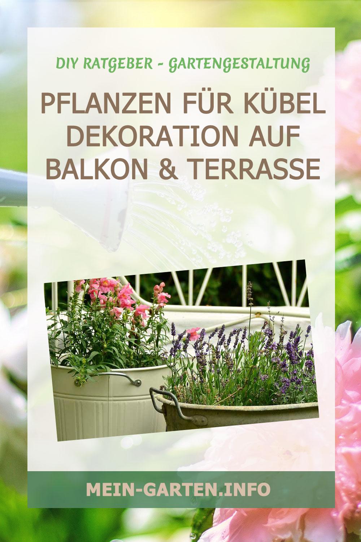 Pflanzen für Kübel – Dekoration auf Balkon & Terrasse