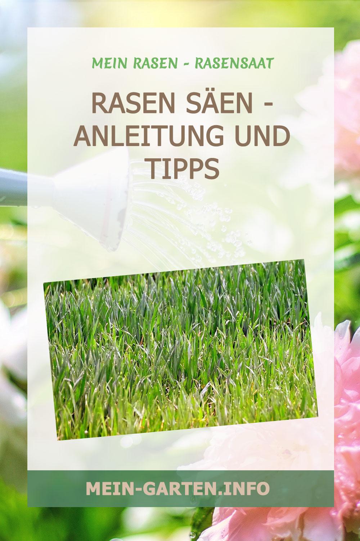 Rasen säen – Anleitung und Tipps für einen perfekten Rasen