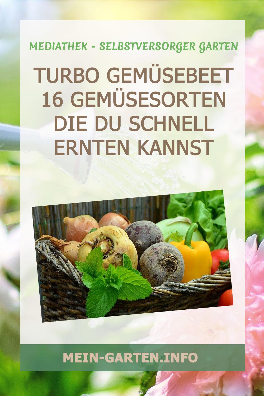 Turbo Gemüsebeet 16 Gemüsesorten die du schnell ernten kannst