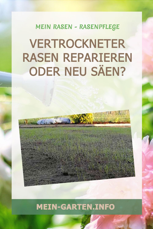 Vertrockneter Rasen – reparieren oder neu säen?