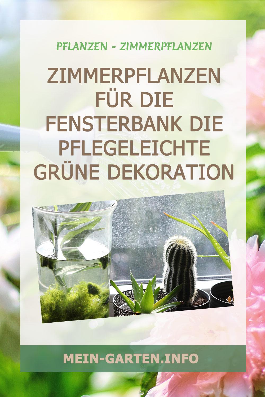 Zimmerpflanzen für die Fensterbank Die pflegeleichte grüne Dekoration