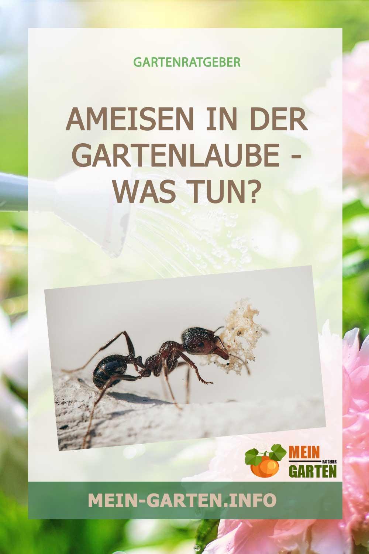 Ameisen in der Gartenlaube – Was tun?