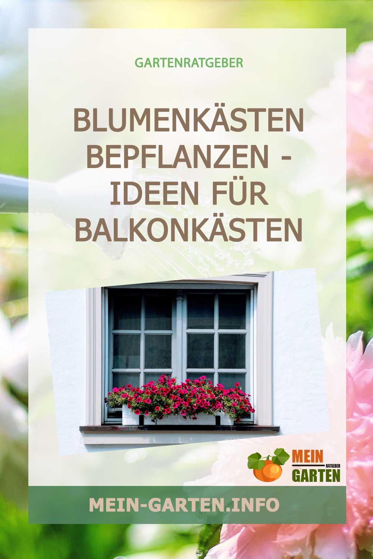 Blumenkästen bepflanzen – Ideen für Balkonkästen