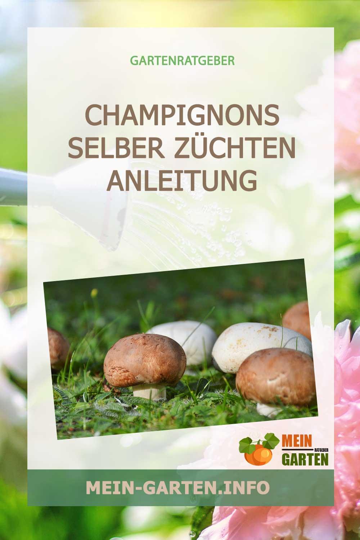 Champignons selber züchten und ernten