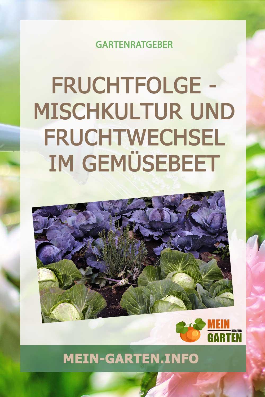 Fruchtfolge – Mischkultur und Fruchtwechsel im Gemüsebeet