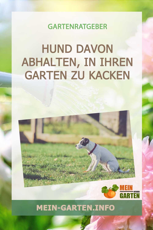 Wie Sie einen Hund davon abhalten, in Ihren Garten zu kacken