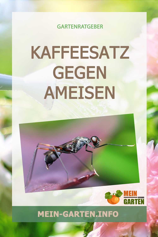 Kaffeesatz gegen Ameisen – Wirksames Hausmittel gegen die Plage?